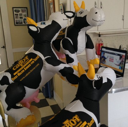 Three inflatable cows looking at a computer screen.