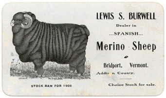 vintage advertisement for Merino sheep