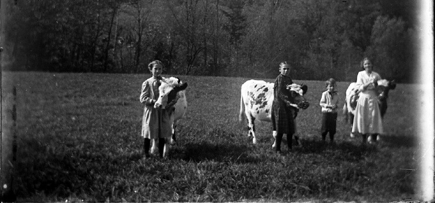 old photo of kids with cows